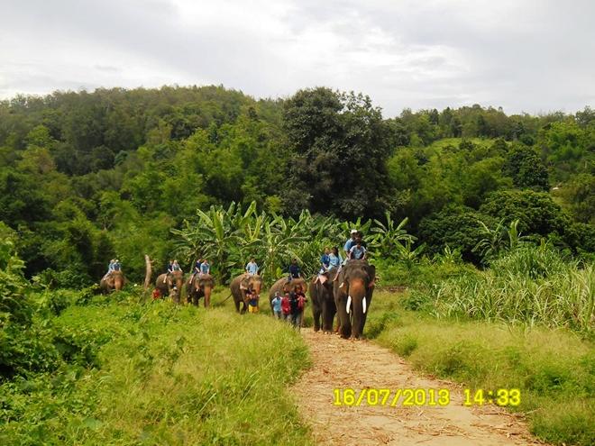 Balade à dos d'éléphants (Baan Chang Elephant Park - Chiang Mai)