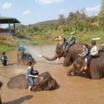 Le site Planete3w recommande le Baan Chang Elephant Park