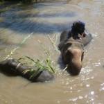 Le site Planete3w recommande le BaanChang Elephant Park