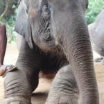 Mae Cot (Baan Chang Elephant Park)
