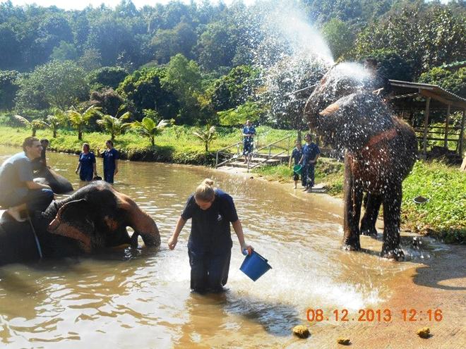 Agréable moment avec les éléphants pendant le bain