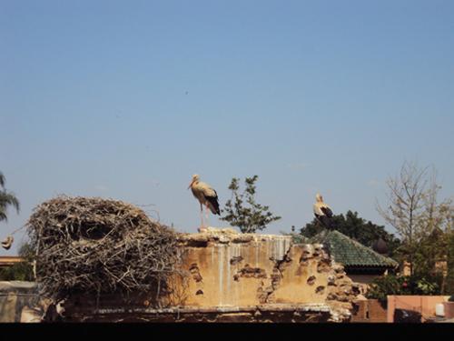 Vue depuis la terrasse du Kasbah Cafe (Marrakech)