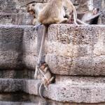 Singes dans le Wat Phra Prang Sam Yod (Lopburi - Thaïlande)