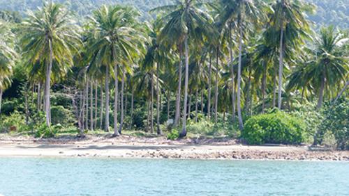 La plage de coconuts beach (Thaïlande)