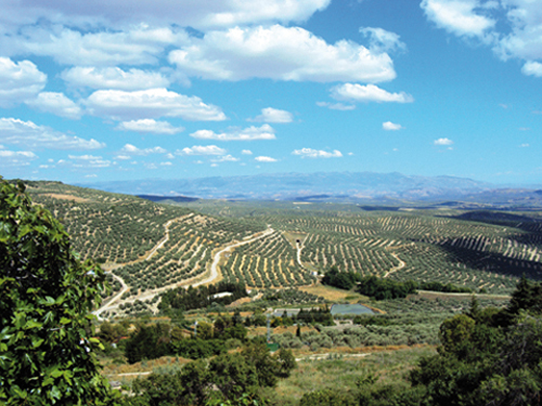 Panorama depuis les remparts d'Ubeda (Andalousie-Espagne)