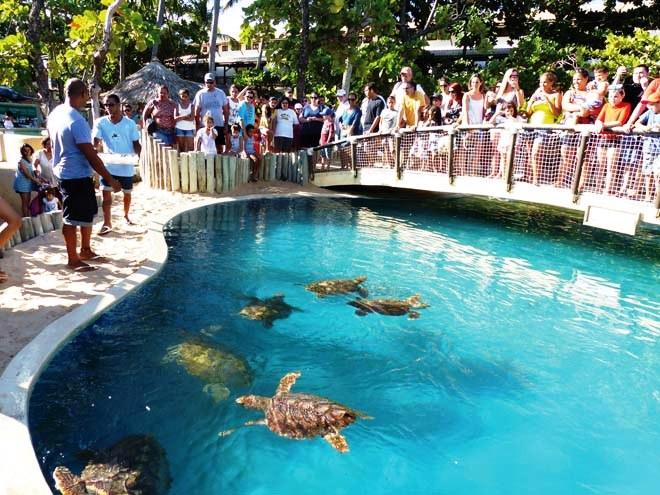 visiter le projet tamar pour la protection des tortues marines