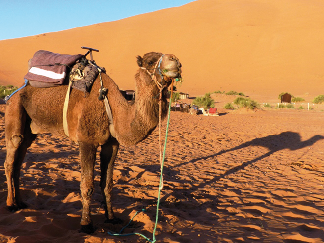 Promenade en dromadaire dans le désert de Merzouga