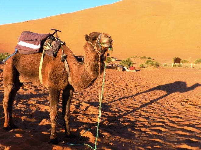 Mon fidele compagnon de route pour traverser le désert de Merzouga