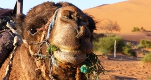 Vivre quelques jours dans le désert du Maroc