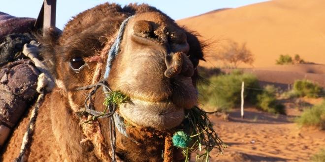 vivre quelques jours dans le d u00e9sert du maroc