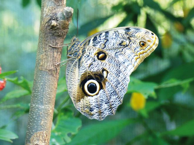 Un étrange papillon dans le parc des Oiseaux de Iguazu