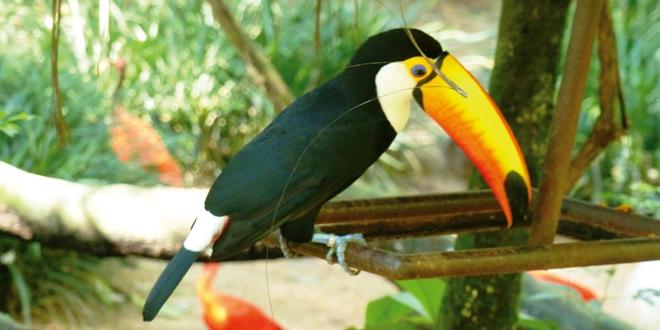visite du parc des oiseaux de iguazu