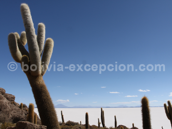 Le désert de sel Salar d'Uyuni en Bolivie
