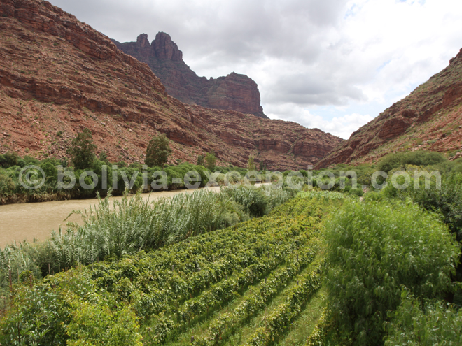 La région viticole de Tarija en Bolivie