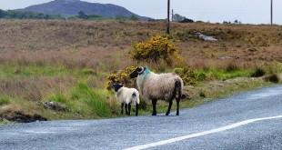 Road Trip Irlande : le Connemara en 1 jour