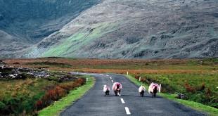 Road Trip Irlande : Bilan, coups de cœurs et déceptions