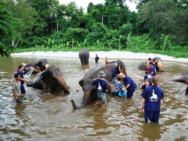 C'est l'heure du bain au Baan Chang Elephant Park près de Chiang Mai