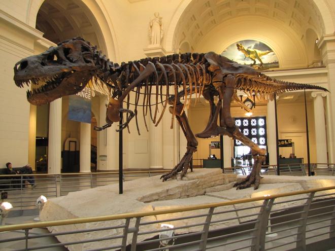 Un immense dinosaure au Musée américain d'histoire naturelle de New York