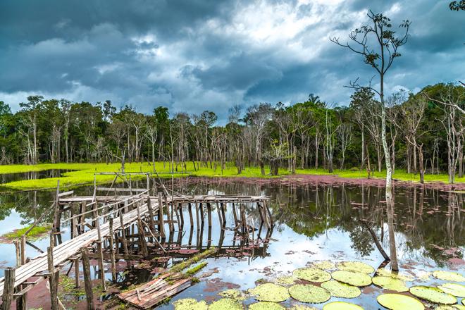 Le Pantanal et son extraordinaire biodiversité