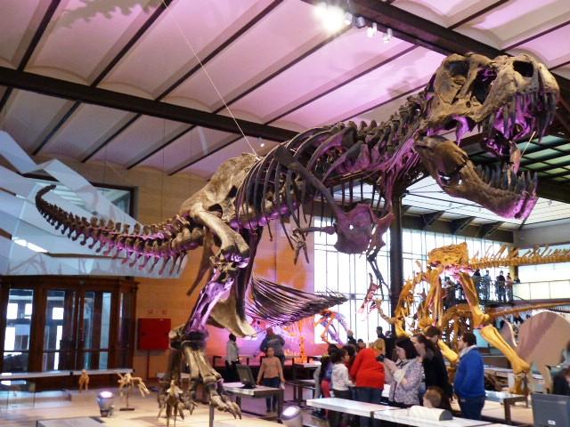 Un imposant squelette de dinosaure dans le musée des sciences naturelles
