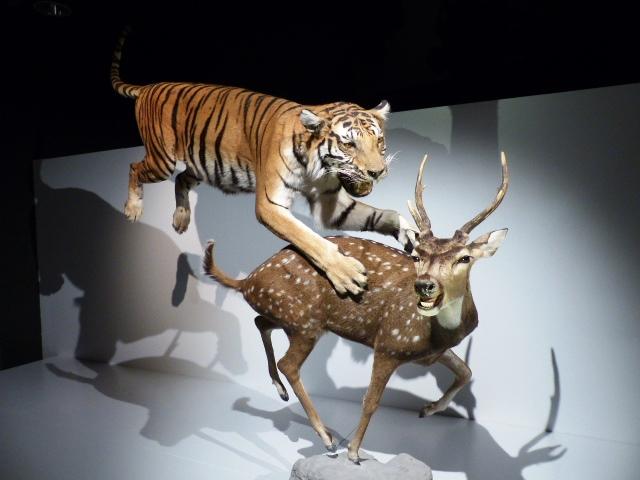 Mise en scène lors de l'exposition WOW Wonders of Wildlife