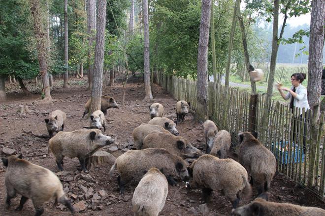 Une des missions des rangers du parc des Grottes de Han : nourrir les animaux