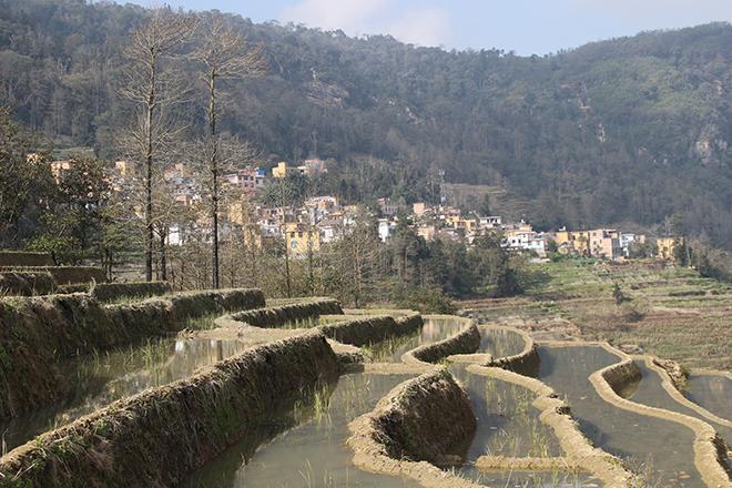 Rizières de Duoyishu (Yuanyang - Yunnan - Chine)