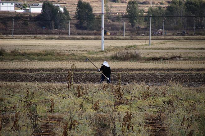 Les rizières autour de Shaxi