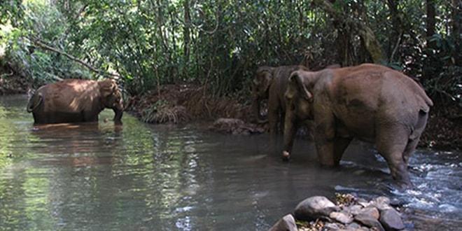 1 journee avec les elephants Cambodge