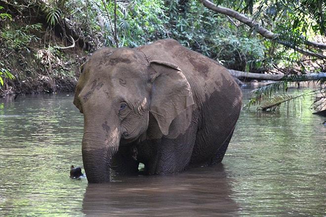 Bain des éléphants Sen Monorom Cambodge éléphants du Mondulkiri