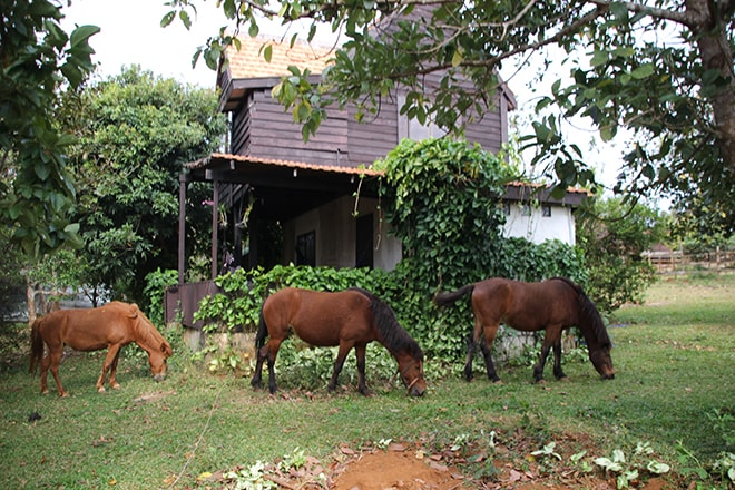 Chevaux Nature Lodge Sen Monorom Cambodge