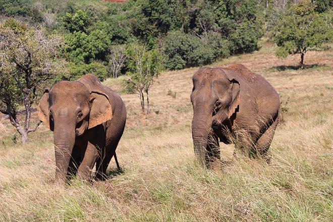 Elephants Mondulkiri Sen Monorom Cambodge
