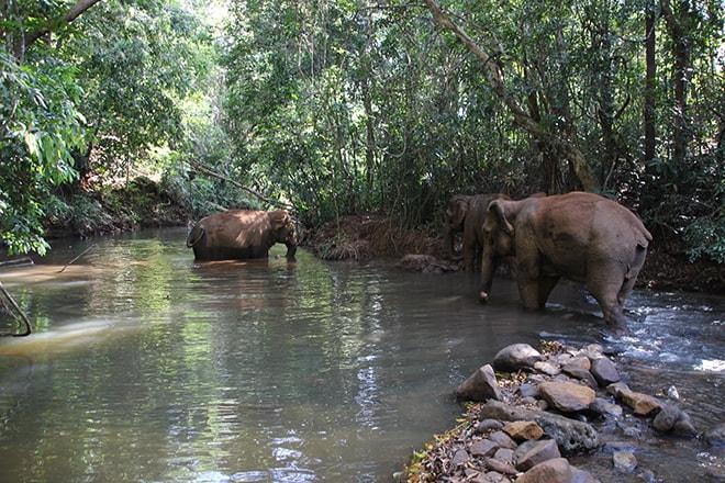 Heure du bain des éléphants Sen Monorom Cambodge éléphants du Mondulkiri