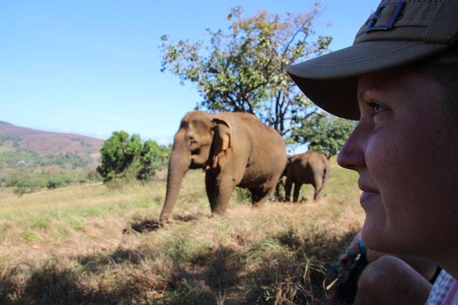 Observer les éléphants Sen Monorom Cambodge éléphants du Mondulkiri
