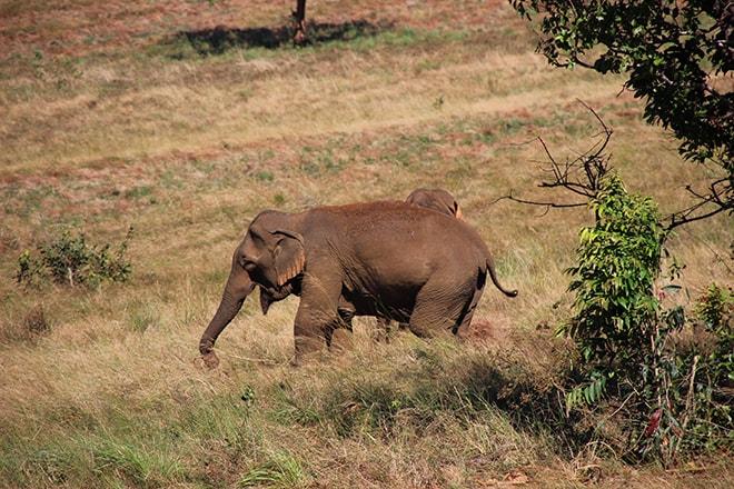 Rencontre avec les éléphants Sen Monorom Cambodge éléphants du Mondulkiri