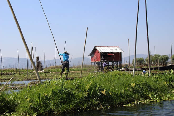 Jardins flottants lac Inle Birmanie