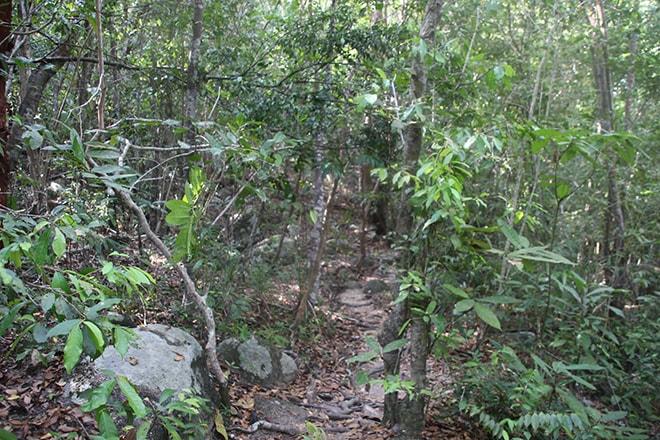 Jungle Ãles Perhentian Malaisie