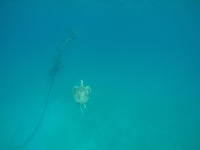 Tortues Snorkeling dans les îles Perhentian