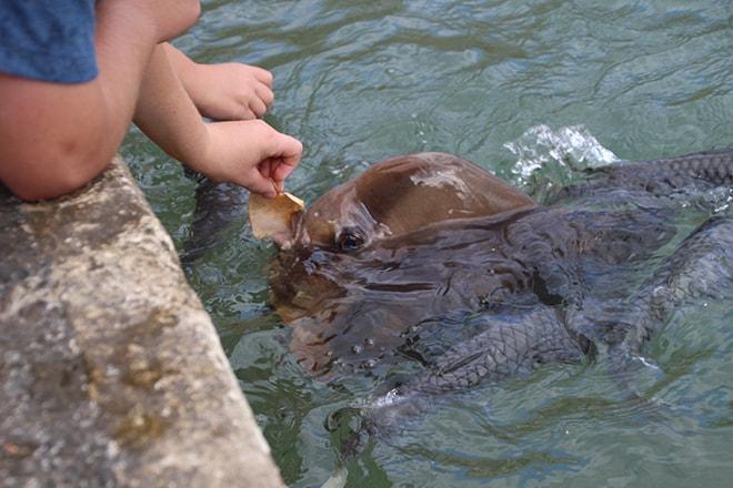Aquascene Darwin Australie