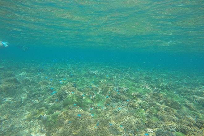 Coraux et poissons Tumbak Sulawesi