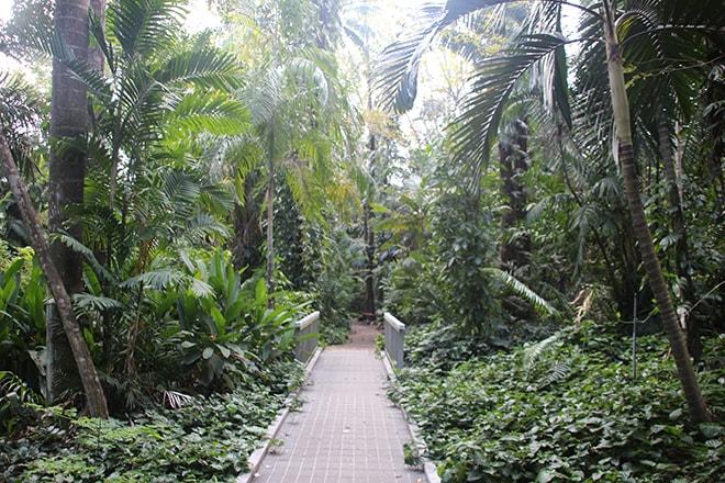 Jardin Botanique Darwin Australie