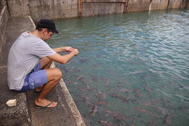 Nourrir les poissons Darwin Australie