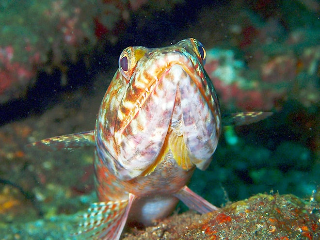 Poisson plongee Tulamben Dive Concept Bali plonger à Tulamben