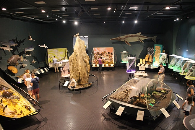 Salle musee Darwin Australie