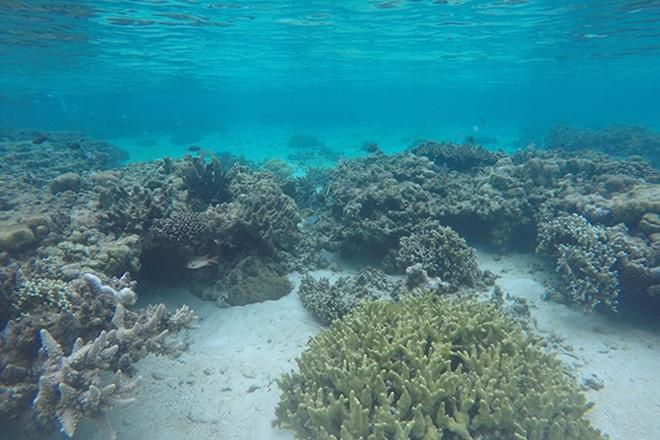 Snorkeling Malengue iles Togian