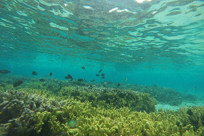 Snorkeling Reef 1 Malengue iles Togian