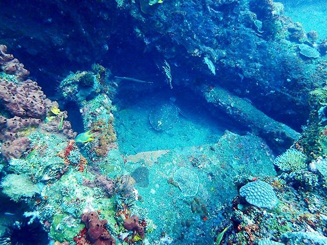 Tortue epave plongee Tulamben Dive Concept Bali plonger à Tulamben