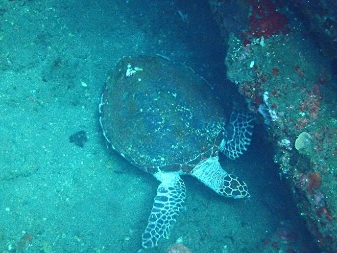 Tulamben Dive Concept Bali plongee tortue plonger à Tulamben