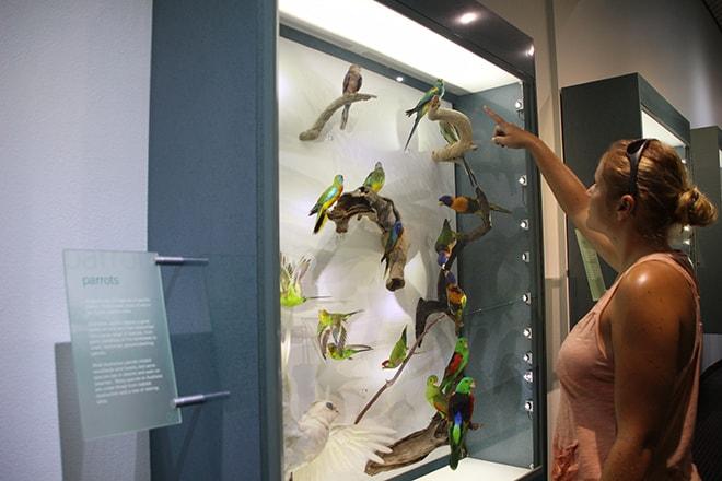 Vitrine Musee Darwin