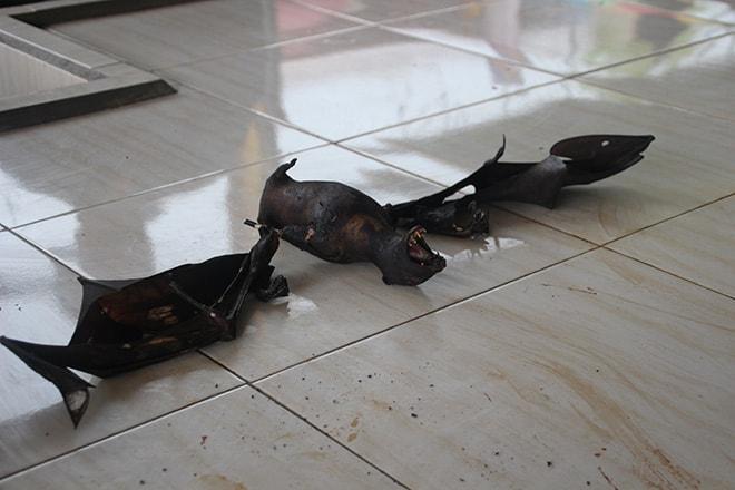 Chauve souris marché aux animaux tomohon
